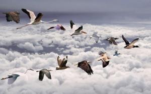migratori01
